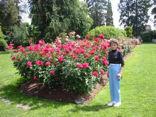 A picture named Rosegarden2.jpg
